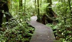 לא רק גיזום עצים: הכן גינתך לקיץ